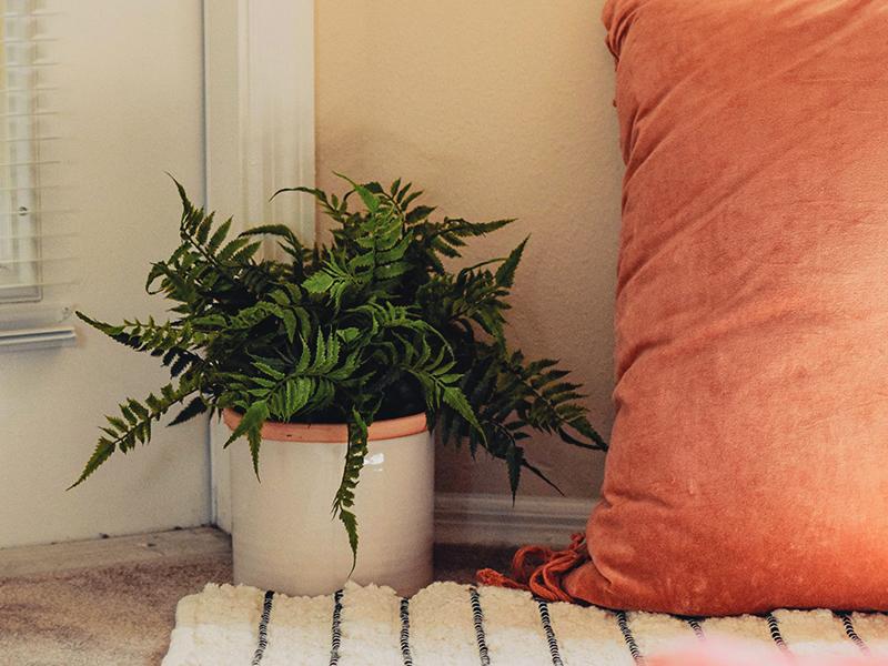 fern plant blog