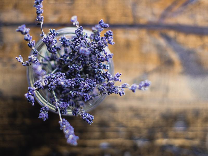 lavender plant blog