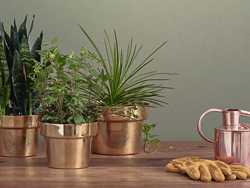 Our Easy Guide to Antistress Plants