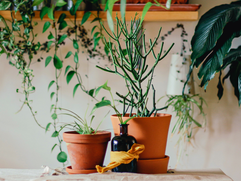 Behind the Scenes: Top 5 Plants in Our Corporate Office